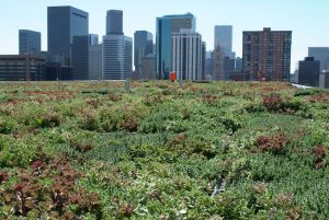Green commercial roofing with Denver skyline in background
